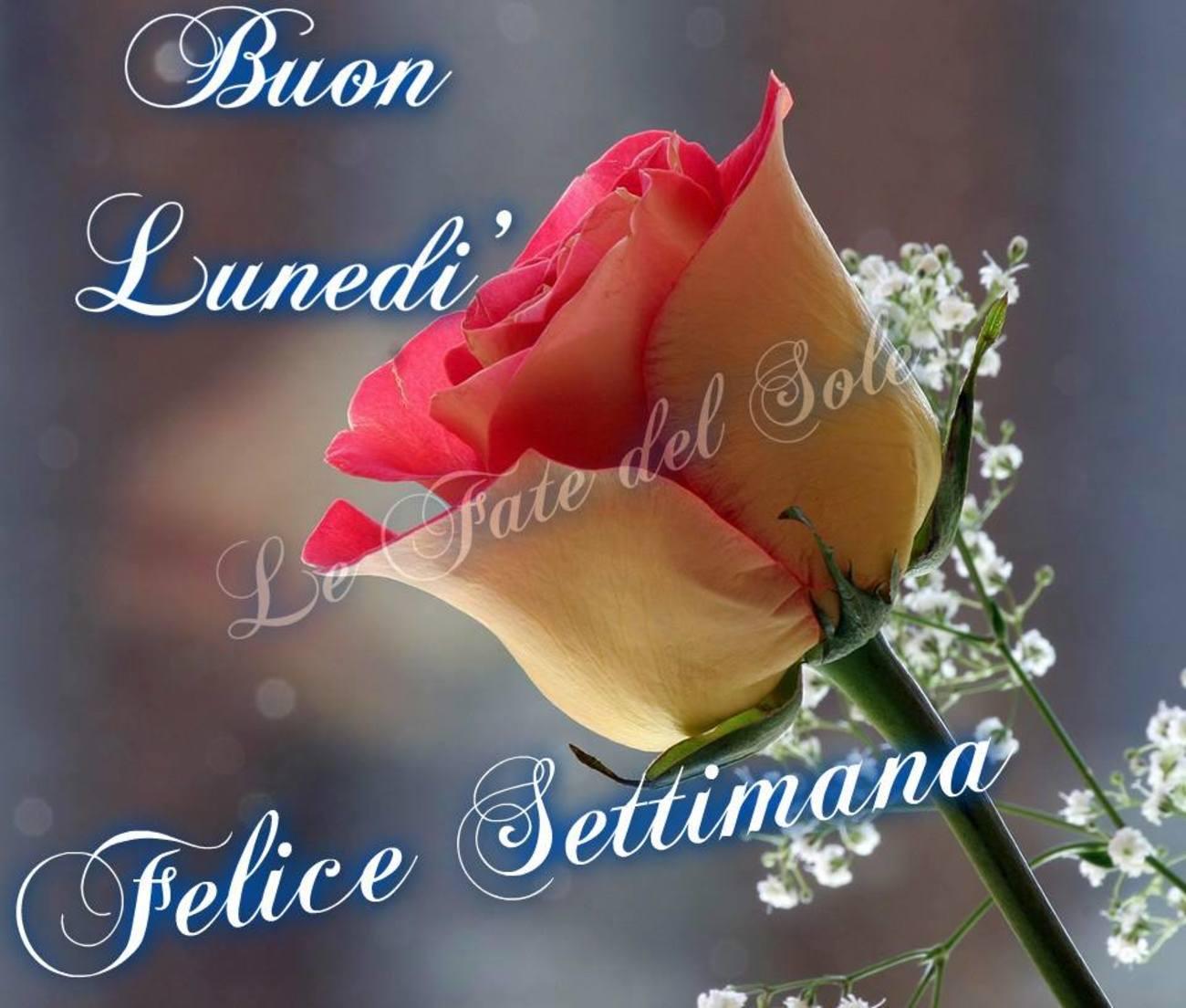 Buon Lunedì Buona Settimana rosa 121 - Buongiorno-Immagini.it