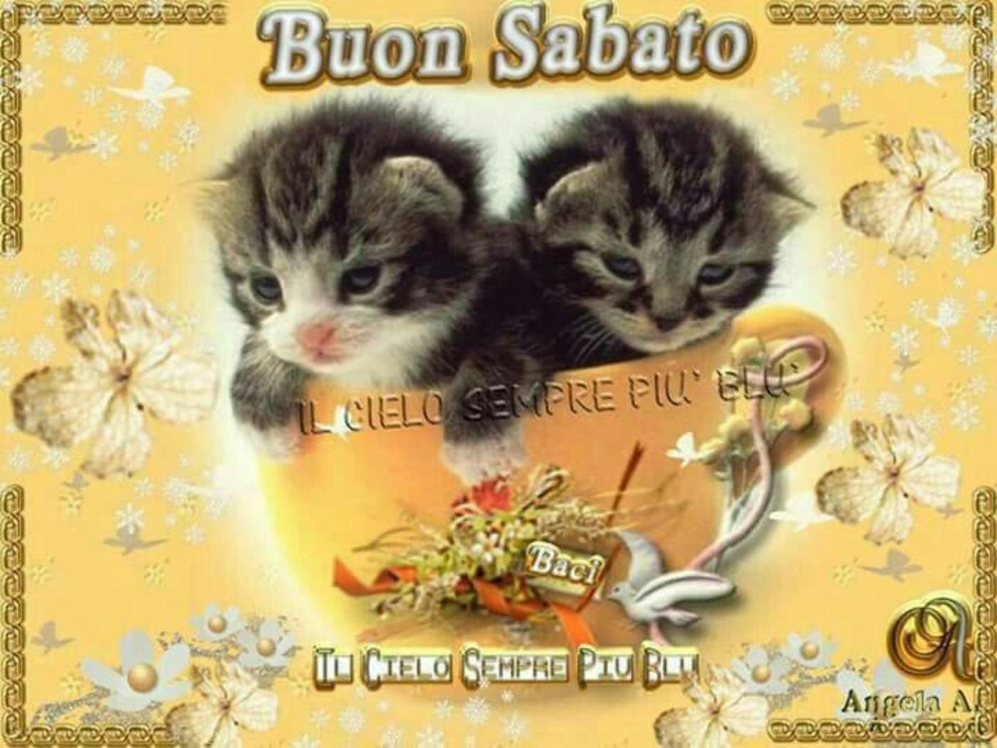Buon sabato coi gattini belle foto buongiorno for Buongiorno con gattini