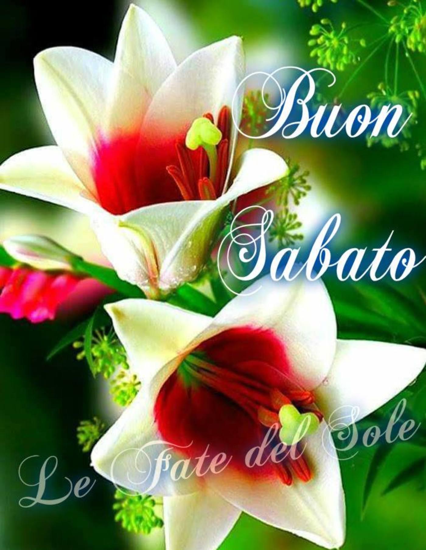Buon Sabato E Buon Fine Settimana 7 Buongiorno Immagini It