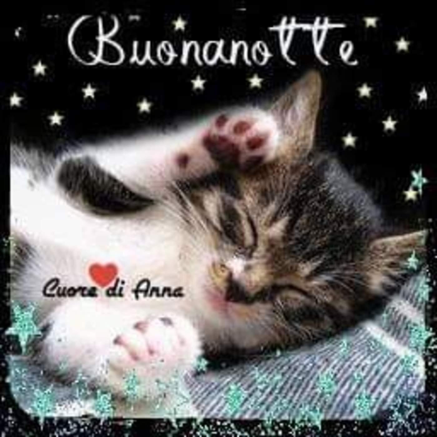 Buonanotte Gattino Buongiorno Immagini It