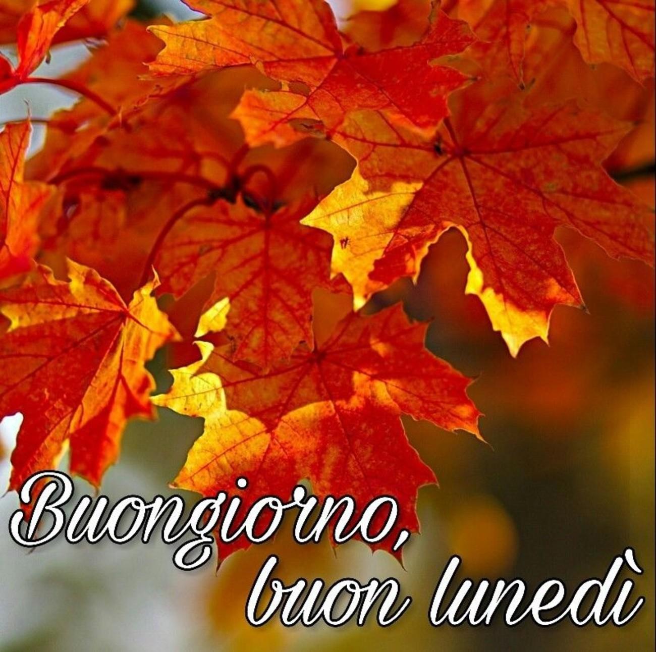 Buongiorno Buon Lunedì Autunnale 101 Buongiorno Immagini It