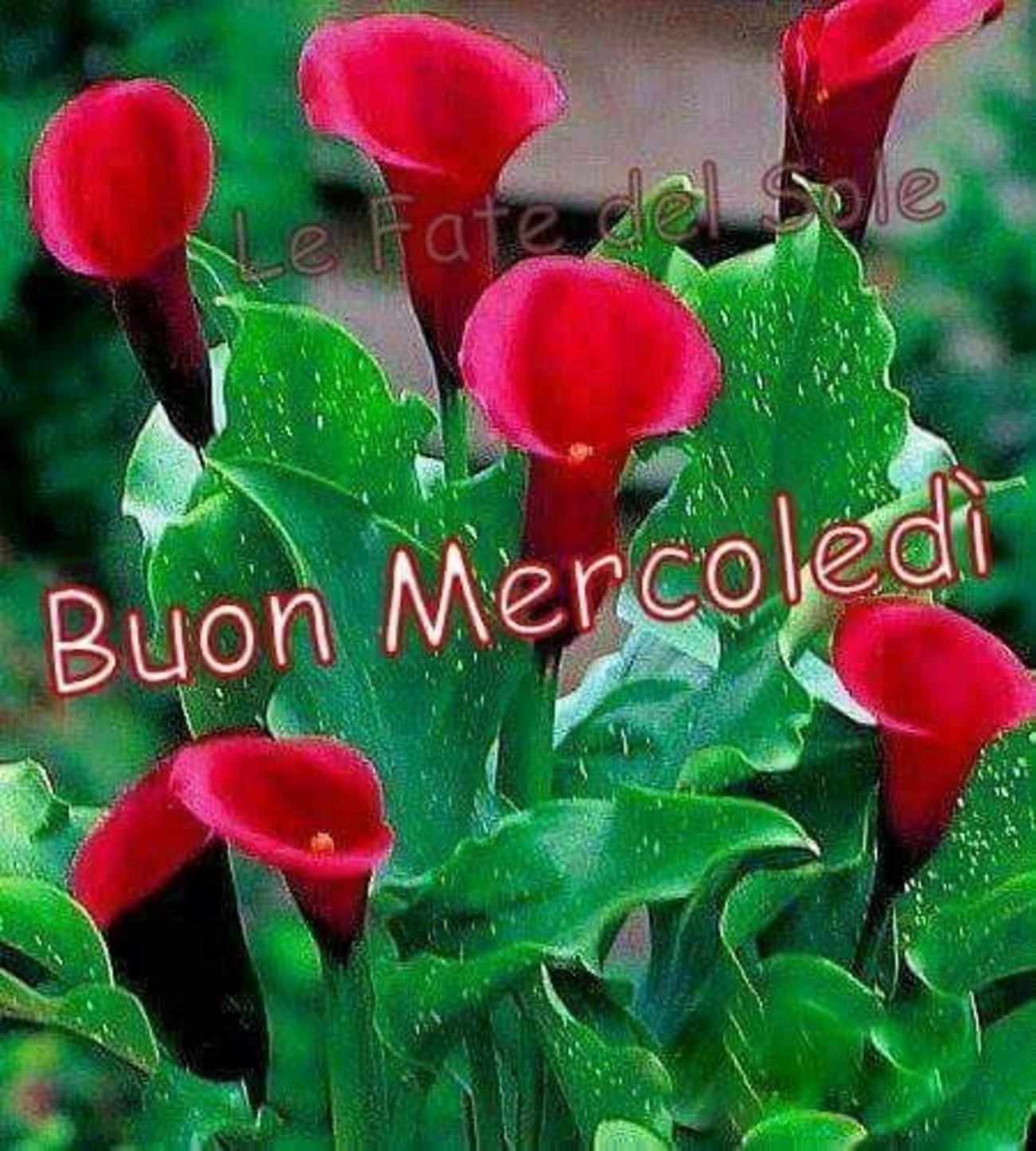 Immagini x Buon Mercoledì coi fiori 120