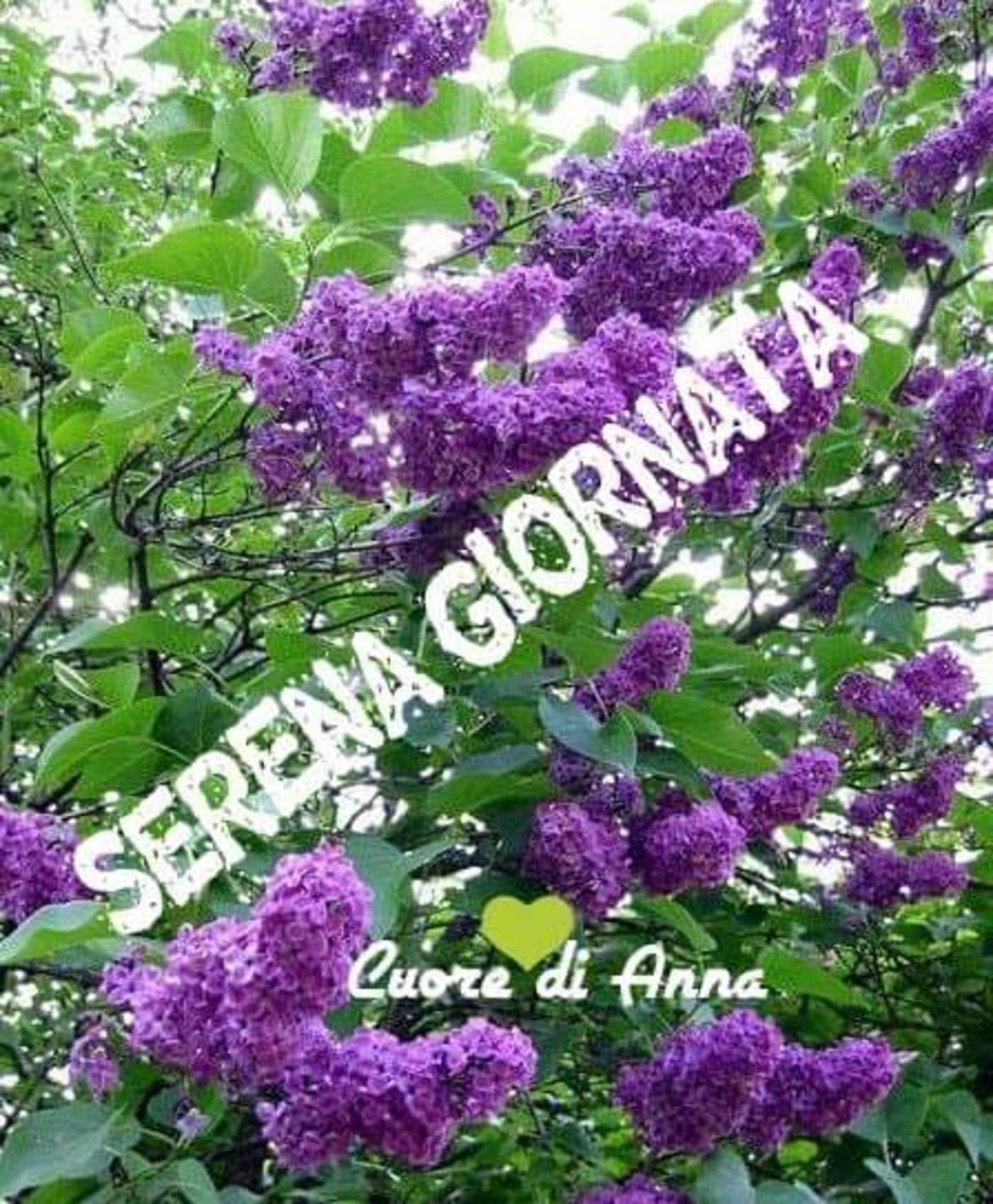 Serena Giornata 133